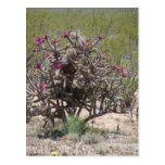 New Mexico Cholla in Bloom Post Card