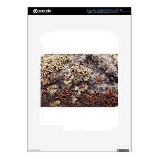 New Mexico Lichen On Desert Rock iPad 3 Decals
