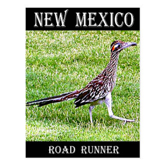New Mexico Roadrunner Postcard