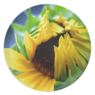 New Mexico Sunflower Dinner Plates