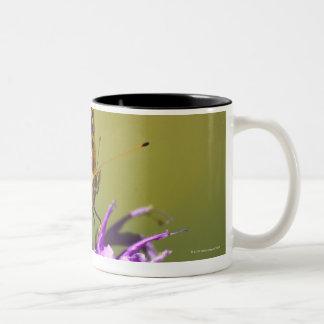 new mexico, united states of america Two-Tone coffee mug