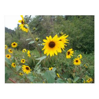 New Mexico Wildflowers Postcard