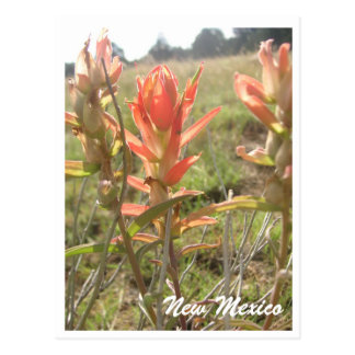 New Mexico Wildflowers Post Card