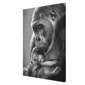 New Mother Gorilla Canvas Print