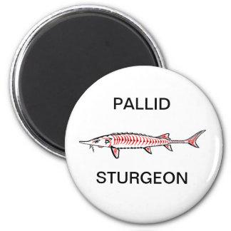 New Native - Pallid Magnets