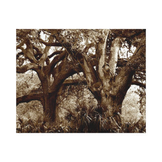 New Orleans Live Oak Trees Gallery Wrapped Canvas