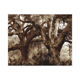 New Orleans Live Oak Trees Canvas Print