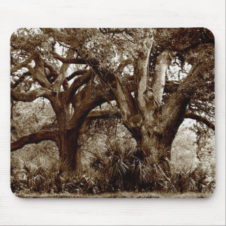 New Orleans Live Oak Trees Mouse Pad