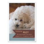 "New Pet 2 Photo Brown Banner Photo Announcement 3.5"" X 5"" Invitation Card"
