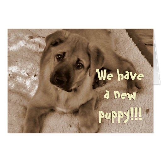 Welcome New Puppy Cards, Welcome New Puppy Card Templates. Daycare Flyers Template Free. Fall Party Invitation Template. Make Your Own Motivational Poster. Marine Boot Camp Graduation Shirts. Cleaning Schedule Template For Office. Twitter Banner Template. Business Model Template Word. Free Personal Website Template