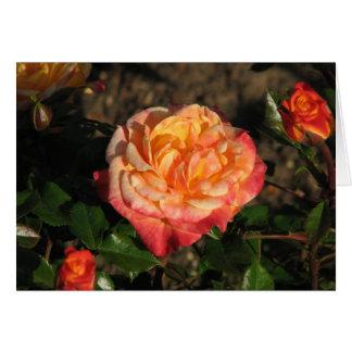 New Rose 048 Card