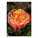 New Rose 048 Greeting Cards