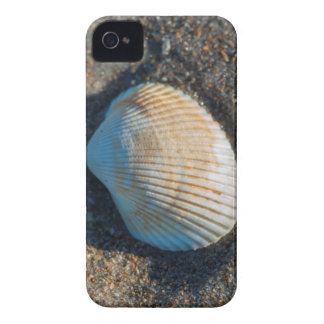 New Smyrna Beach, cockle shell iPhone 4 Case
