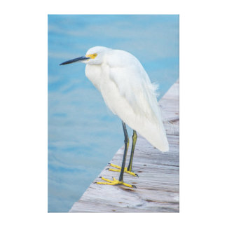 New Smyrna Beach, Snowy Egret on dock Canvas Print