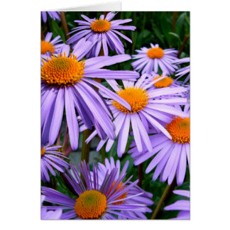 New York Aster Card