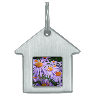 New York Aster Pet Name Tags