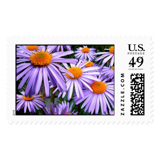 New York Aster Postage Stamp