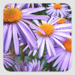 New York Aster Stickers
