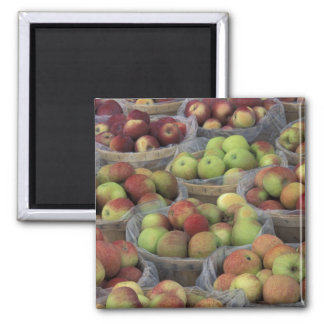 New York State Macintosh apples in baskets Magnet