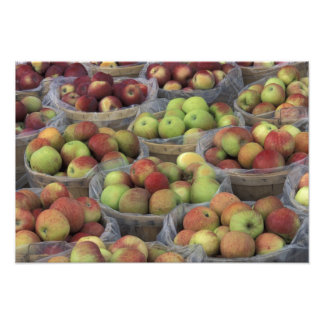 New York State Macintosh apples in baskets Photo Print