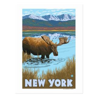 New YorkMoose Drinking in Lake Postcards