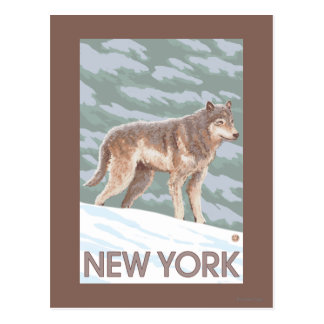 New YorkWolf Scene Postcard