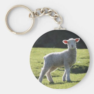 New Zealand - Adorable Lamb Looking at You Basic Round Button Keychain