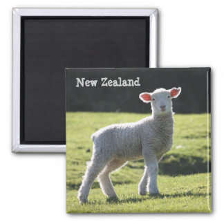 New Zealand - Adorable Lamb Looking at You Magnet