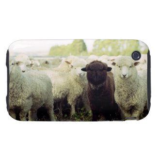 New Zealand Tough iPhone 3 Case