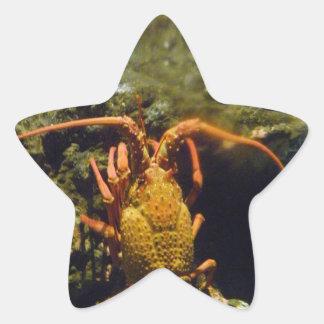 New Zealand Crayfish Star Sticker