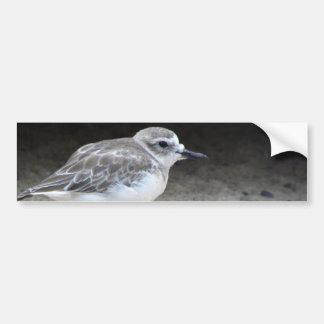 New Zealand Dotterel Bumper Sticker