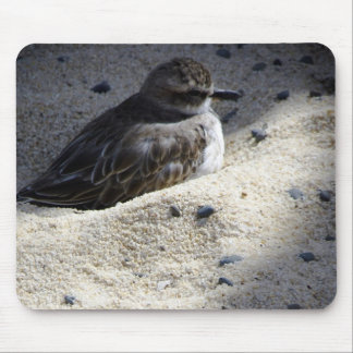 New Zealand Dotterel Mouse Pad