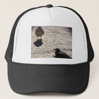 New Zealand Dotterel Trucker Hat