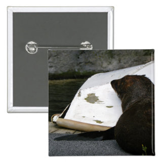 New Zealand Fur Seal Pinback Buttons