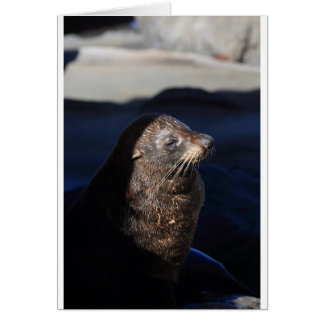 New Zealand fur seal Cape Palliser seal colony Card