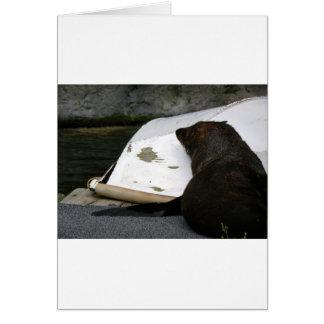 New Zealand Fur Seal Card