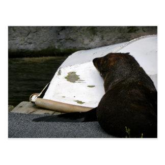 New Zealand Fur Seal Postcard