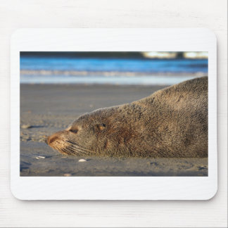 New Zealand fur seal sleeping on beach Mouse Pad