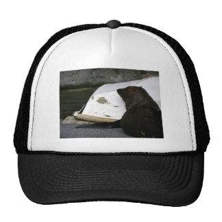 New Zealand Fur Seal Trucker Hat