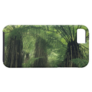 New Zealand Haast Valley Westland Soft Tree iPhone 5 Cases