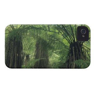 New Zealand Haast Valley Westland Soft Tree Blackberry Bold Cover