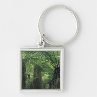 New Zealand, Haast Valley, Westland, Soft Tree Key Chains