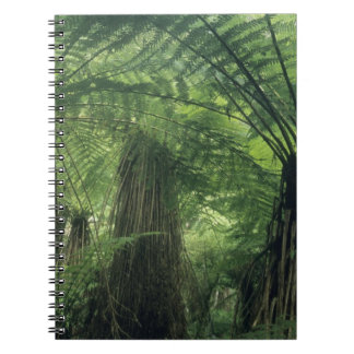New Zealand, Haast Valley, Westland, Soft Tree Note Book