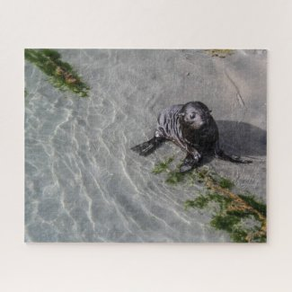 New Zealand Jigsaw Puzzle - Seal pup Wharariki