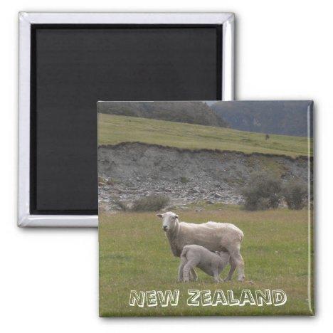 New Zealand, Lamb feeding (Fridge Magnet)
