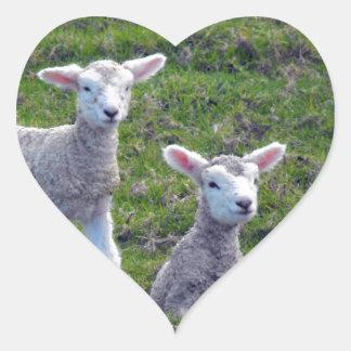 New Zealand Lambs Heart Sticker