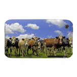 New Zealand, North Island, Auckland iPhone 3 Cases