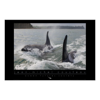 New Zealand Orca Poster