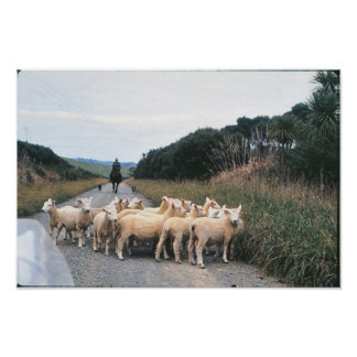 New Zealand Road Block Poster