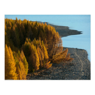 New Zealand -Sander-koot- Postcard